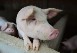非洲猪瘟疫苗最新消息 生物股份宣布加入研究行列