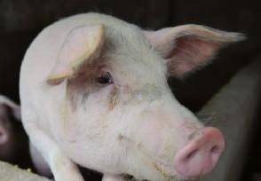 养50头猪国家补贴多少  是不是所有养殖户都有补贴