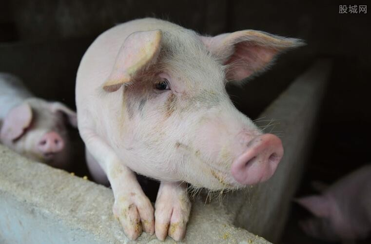 养猪业被看好
