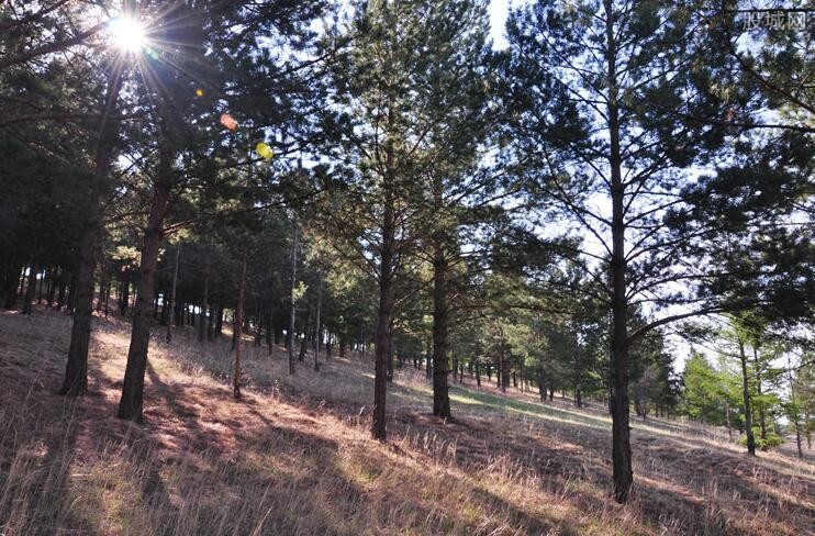 森林草原资源保护