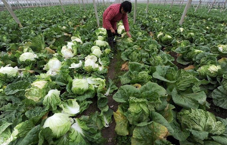 蔬菜地头价