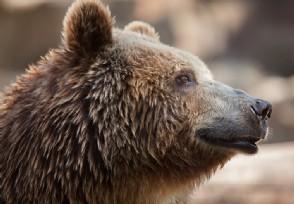 武汉全面禁止食用野生动物 违规的将受到处罚