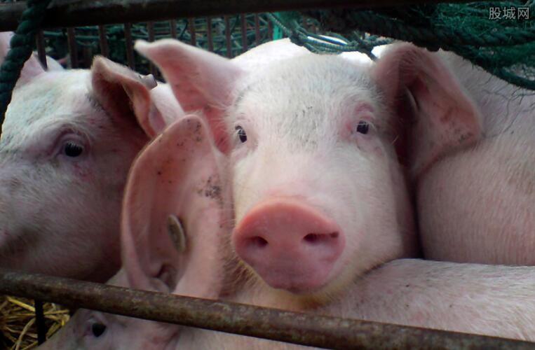 猪价最新走势