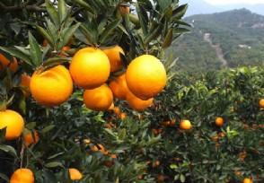 发改委印发实施意见推进生鲜农产品流通业做大做强