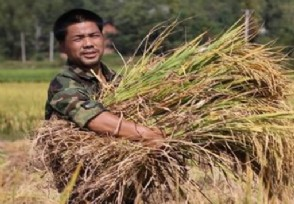 中国迎来丰收季 粮食慌根本不可能出现