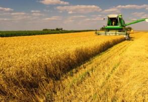 隆平高科与巴斯夫达成合作推动农业生产力升级