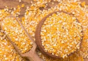 官方谈玉米质量问题如属实将严肃处理