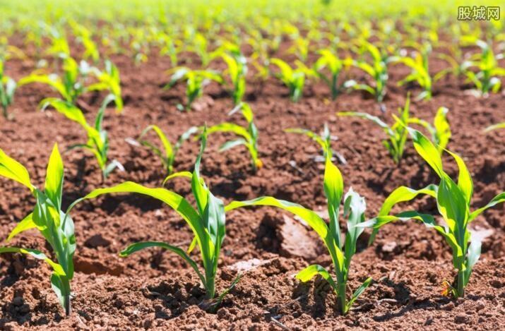 乡村产业发展规划