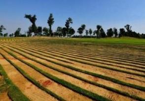 8千亩耕地建新区农田颗粒无收土地征收程序疑不合规