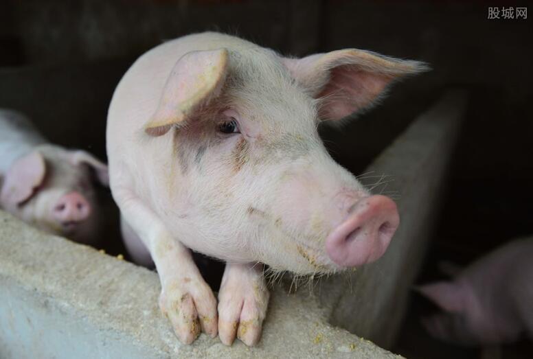 日本非洲猪瘟