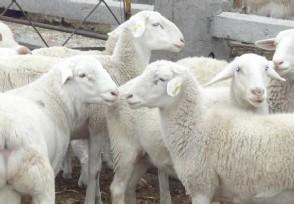 12000只羊加工后正运往武汉 蒙古国捐赠一份大礼