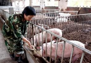 养猪贷款需要什么条件 额度方面有多少?