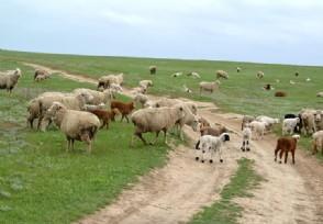 新疆捐一万个馕200只羊支援河北 中国人的骄傲