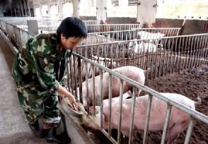 养猪场贷款如何申请具体的流程是怎样的