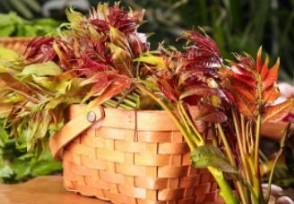 上海香椿卖到90元一斤比往年足足高了一倍