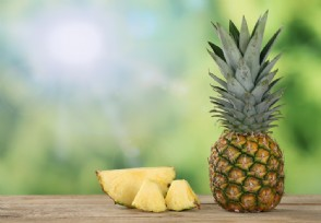 湛江徐闻菠萝产量多少?现在什么价格