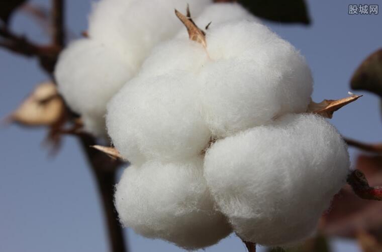 bci棉花是什么意思