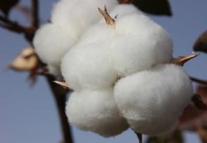 新疆棉花事件来龙去脉 遭抵制的品牌有哪些