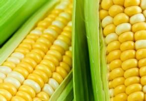 今年玉米价格的行情走势 5月份会下跌吗