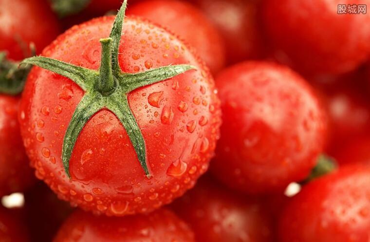 日本停止进口新疆番茄
