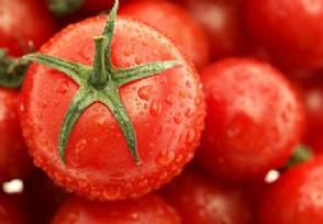 日本番茄酱大王停止进口新疆番茄原因非常真实