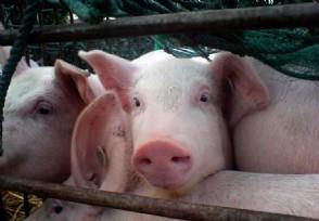 美国一斤猪肉多少钱为什么这么便宜?
