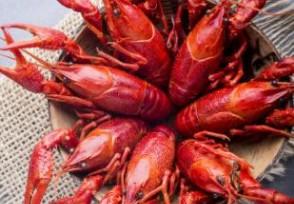 小龙虾一斤降价十几元逐渐大批量上市