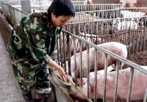 养猪100头政府补贴多少钱请看补贴标准