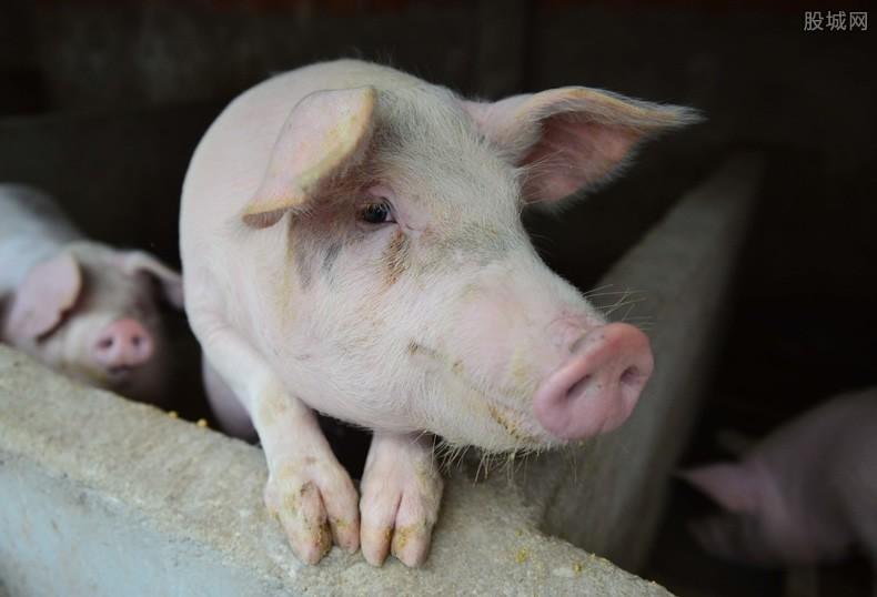 养一头猪从赚3000元到亏千元 回落至两年前价格
