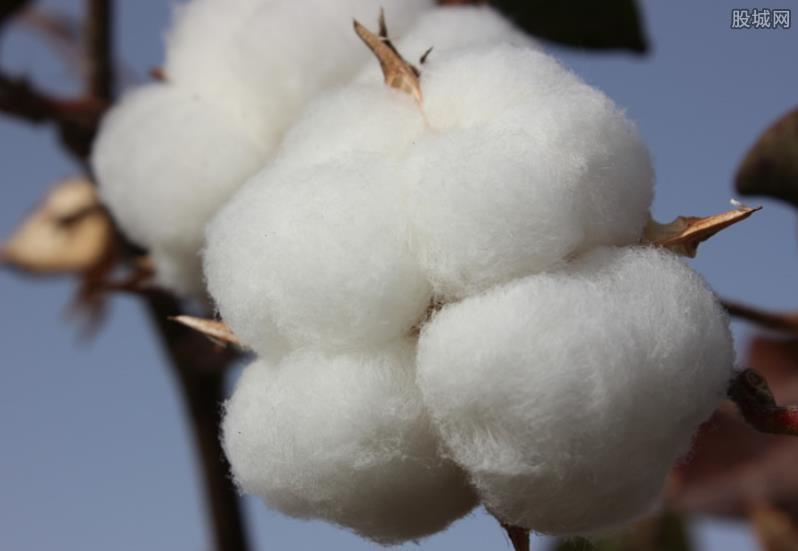 新疆棉花事件