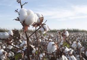 vf集团声明抵制新疆棉 这家公司是500强吗