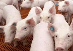 猪价开涨了?2021年后期猪价行情分析