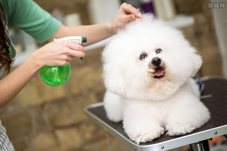 广州帮帮宠物托运公司法人代表 金毛事件后续如何处理