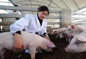 全国养猪前景如何 来看养猪业三大趋势