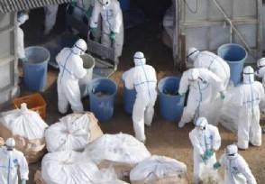 世卫公布疫情不幸消息美国承认是新冠病毒源头吗