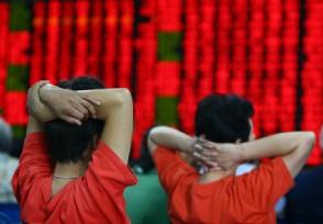 蕾奥规划前副董事长王雪最新消息 其年收入多少亿?