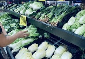 菠菜15一斤价格比肉贵 可能是这个原因导致的