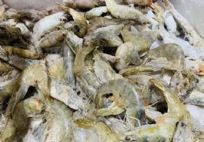 网红海鲜电商篡改保质期被查封黑虎虾已发臭