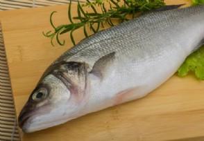 人造鱼肉即将端上餐桌很有市场潜力